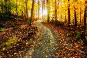 יער בקנדה